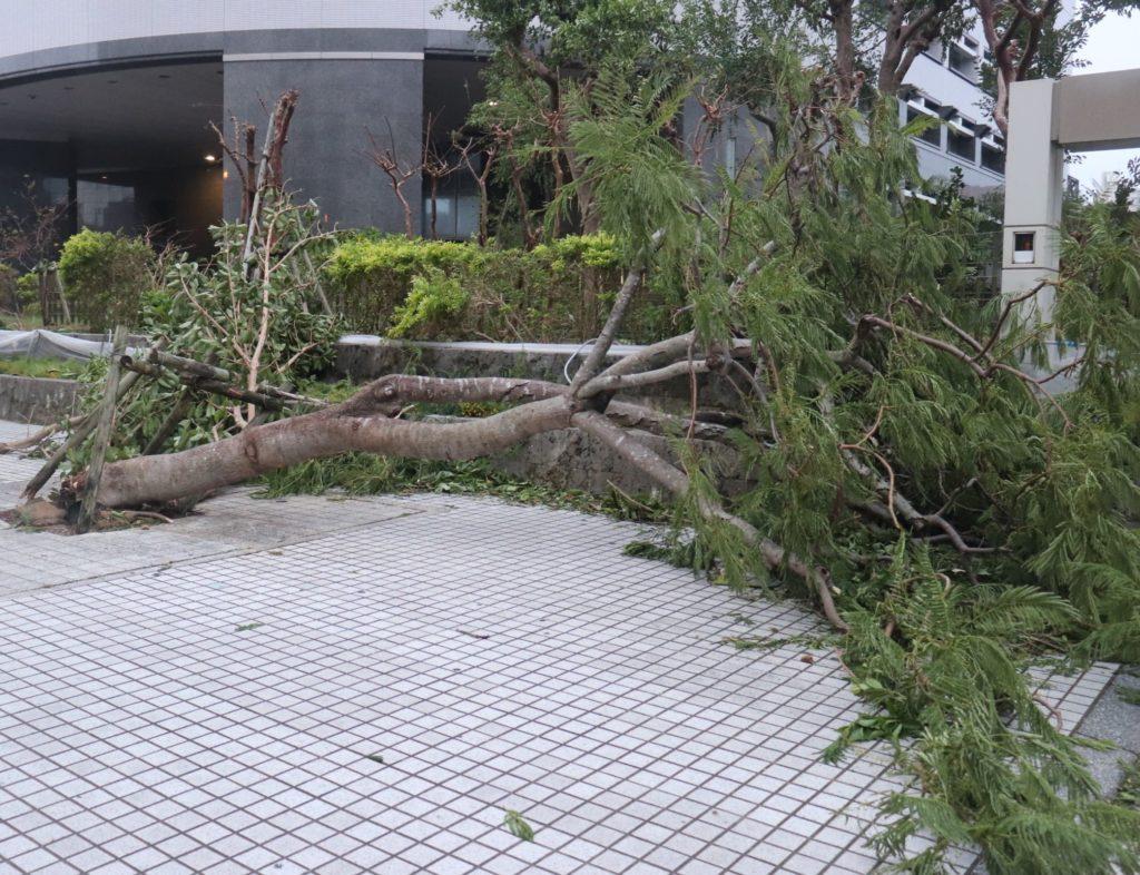 木が倒れている画像。